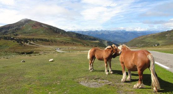 """Récompense supplémentaire, le voyage-aventure """"Sur le pas de la Porte"""" débouche sur de vastes paysages de landes où les chevaux semblent évoluer en liberté, sans barrière autre que le relief"""